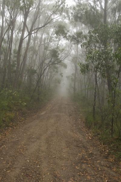 Misty Driveway portrait_400x600